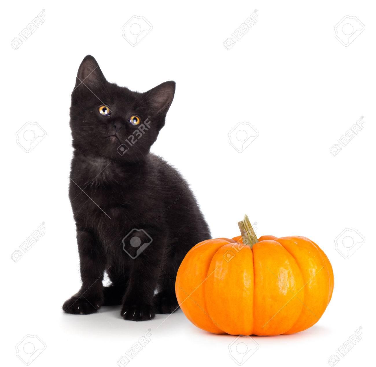 Cute Black Kitten Next To A Mini Pumpkin Isolated White Stock