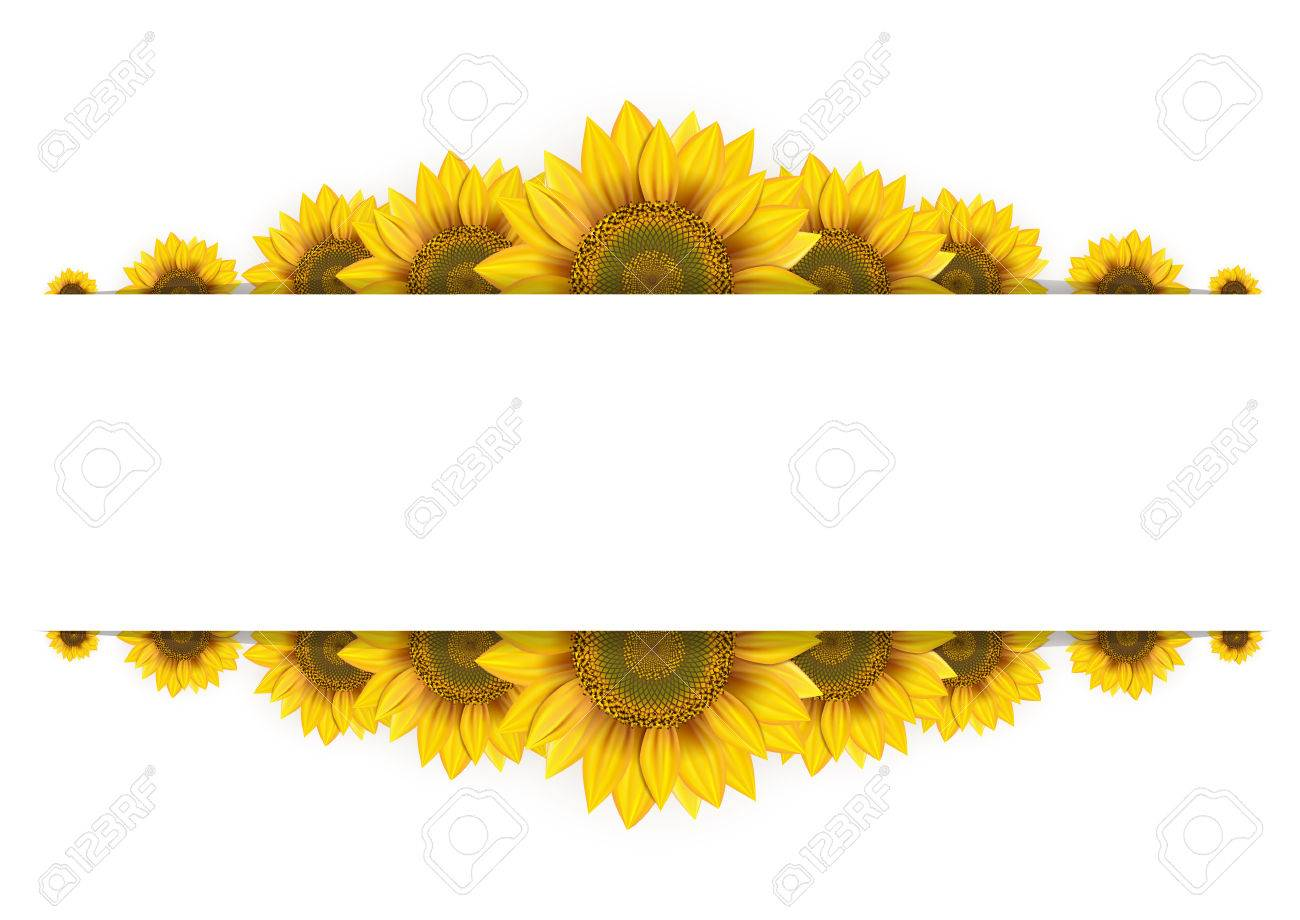 Frame Of Sunflowers On A White Background Royalty Free Cliparts ...