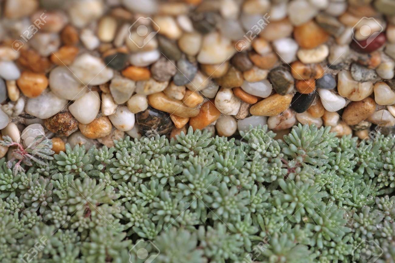 Fresh green plant on stone background - 35711335