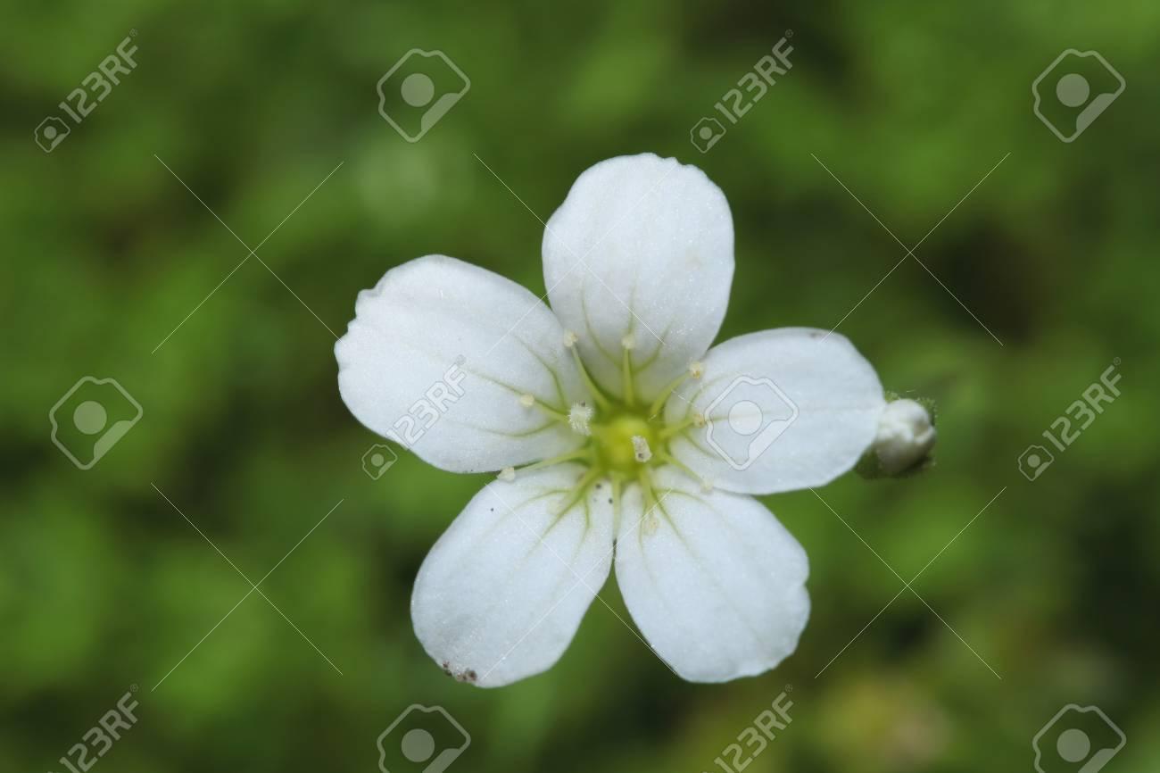 Single little white flower on green - 35711351