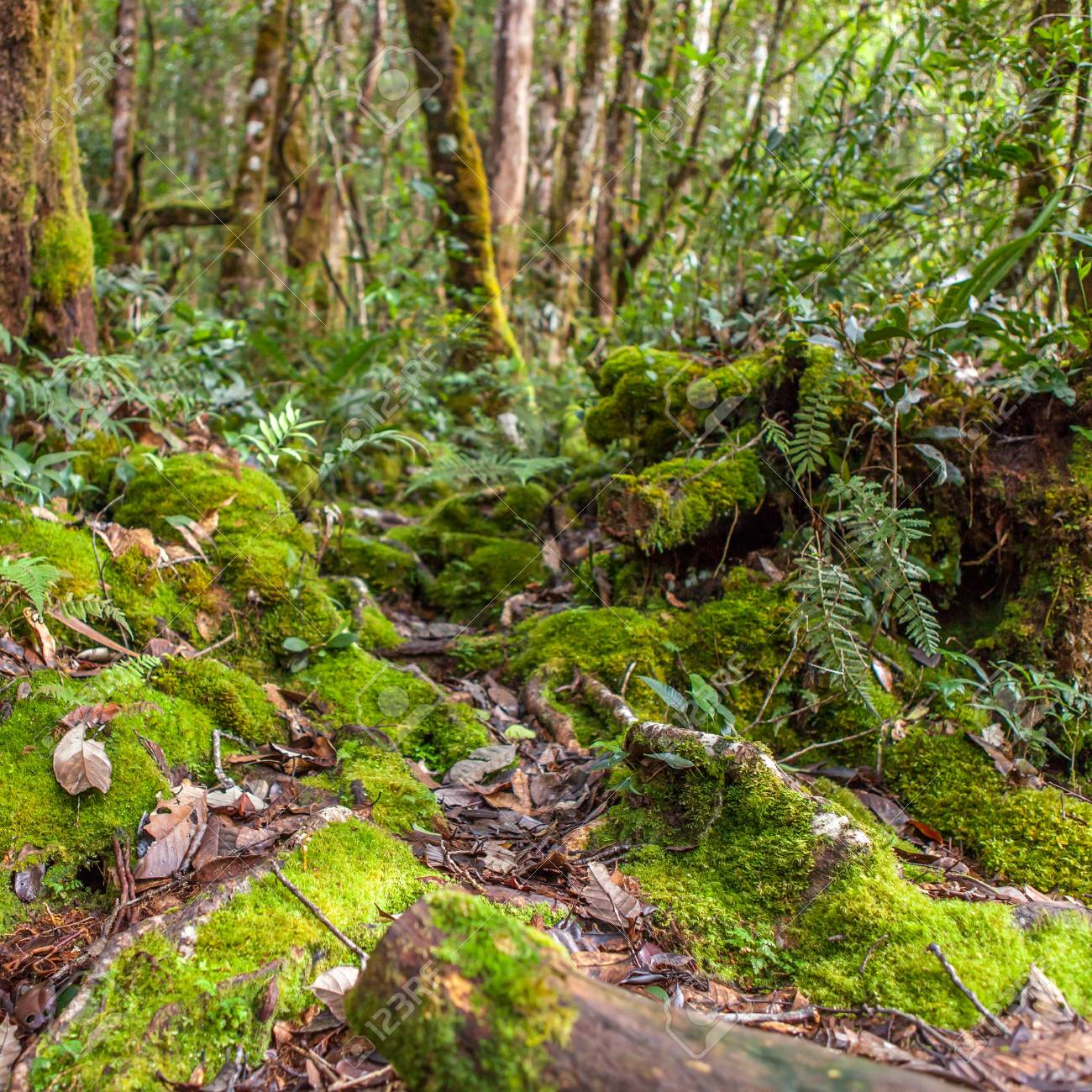 Wild Outdoor Jungle Trail Rainforest Scenery With Green Moss