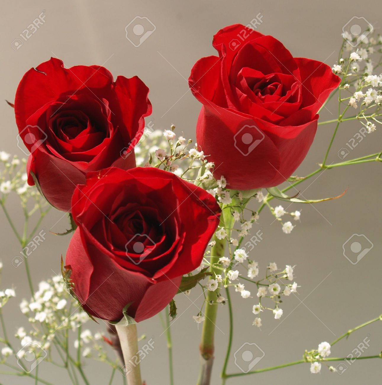 3 red roses images