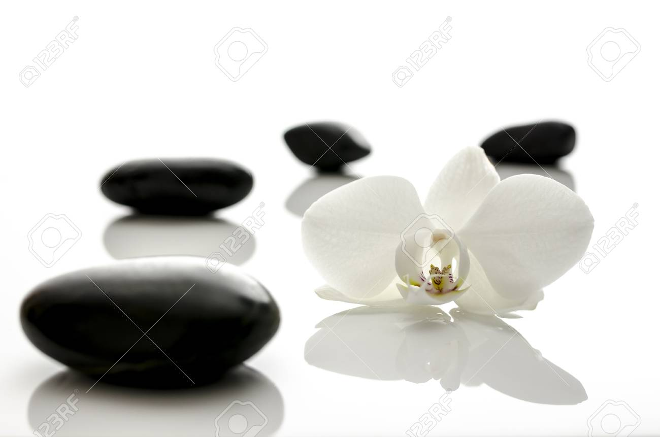 White orchid flower with spa stones  Shallow dof Stock Photo - 17899315