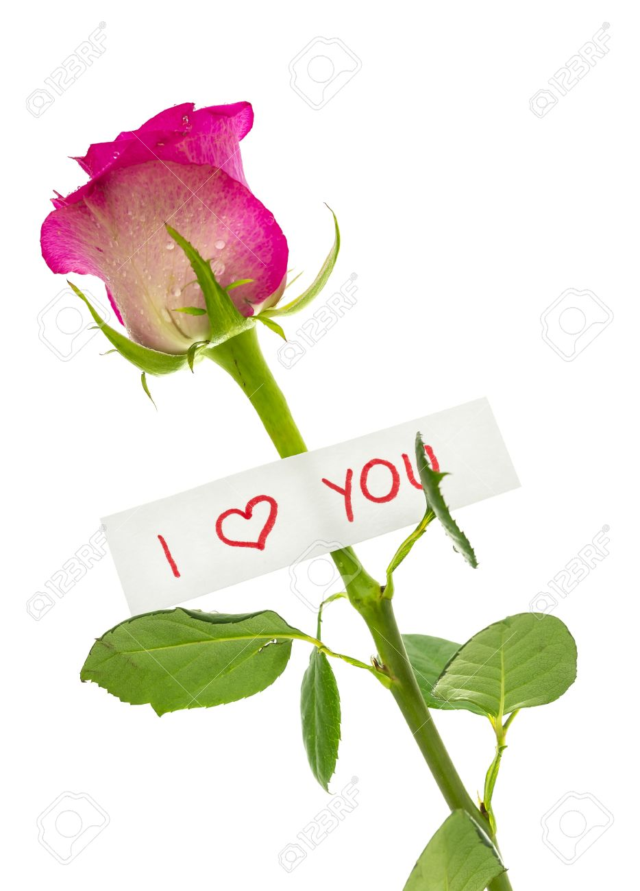 I Love You Message Attached To A Beautiful Pink Rose Isolated