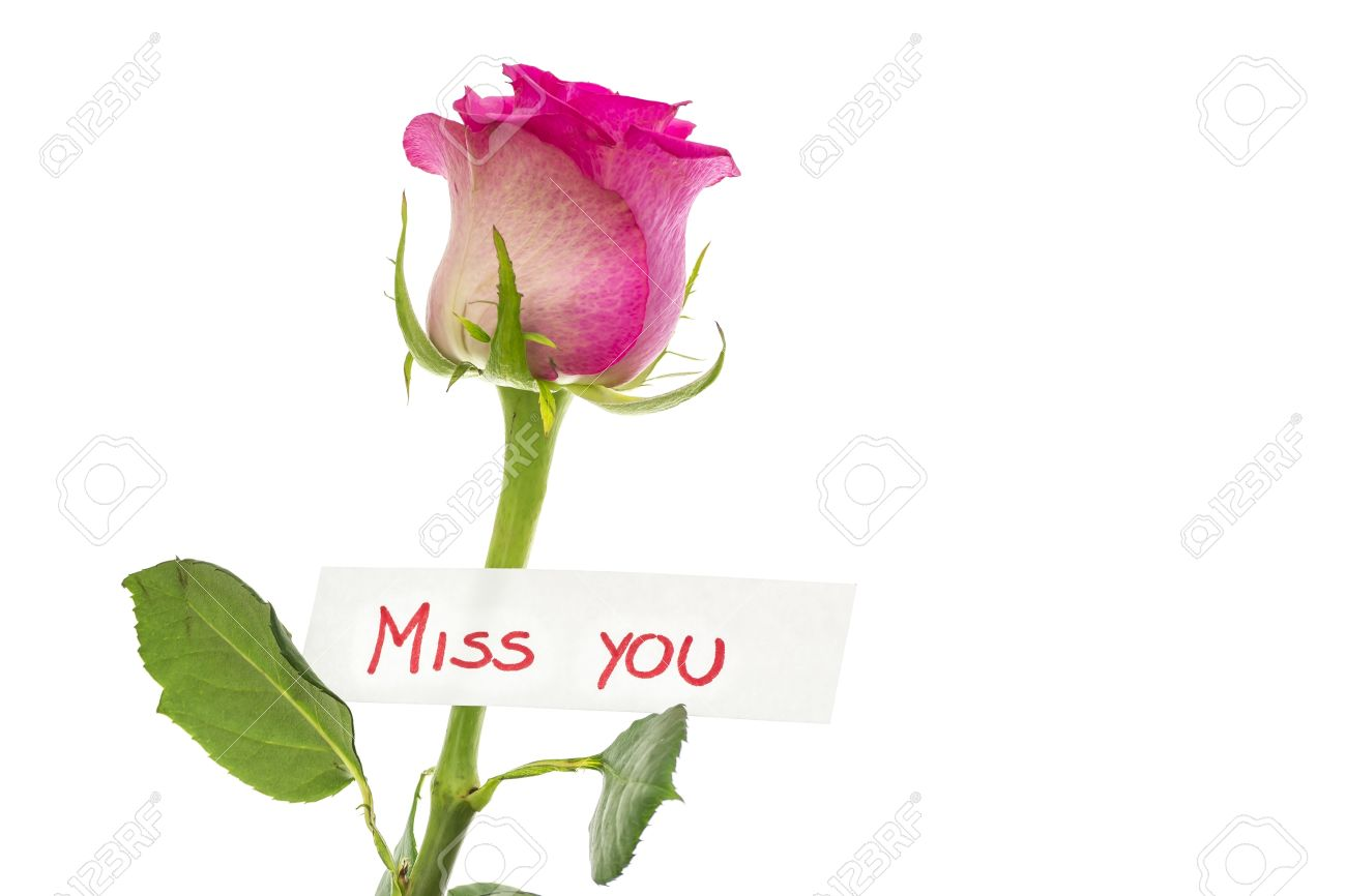 Card With Miss You Message Attached To Beautiful Pink Rose Isolated