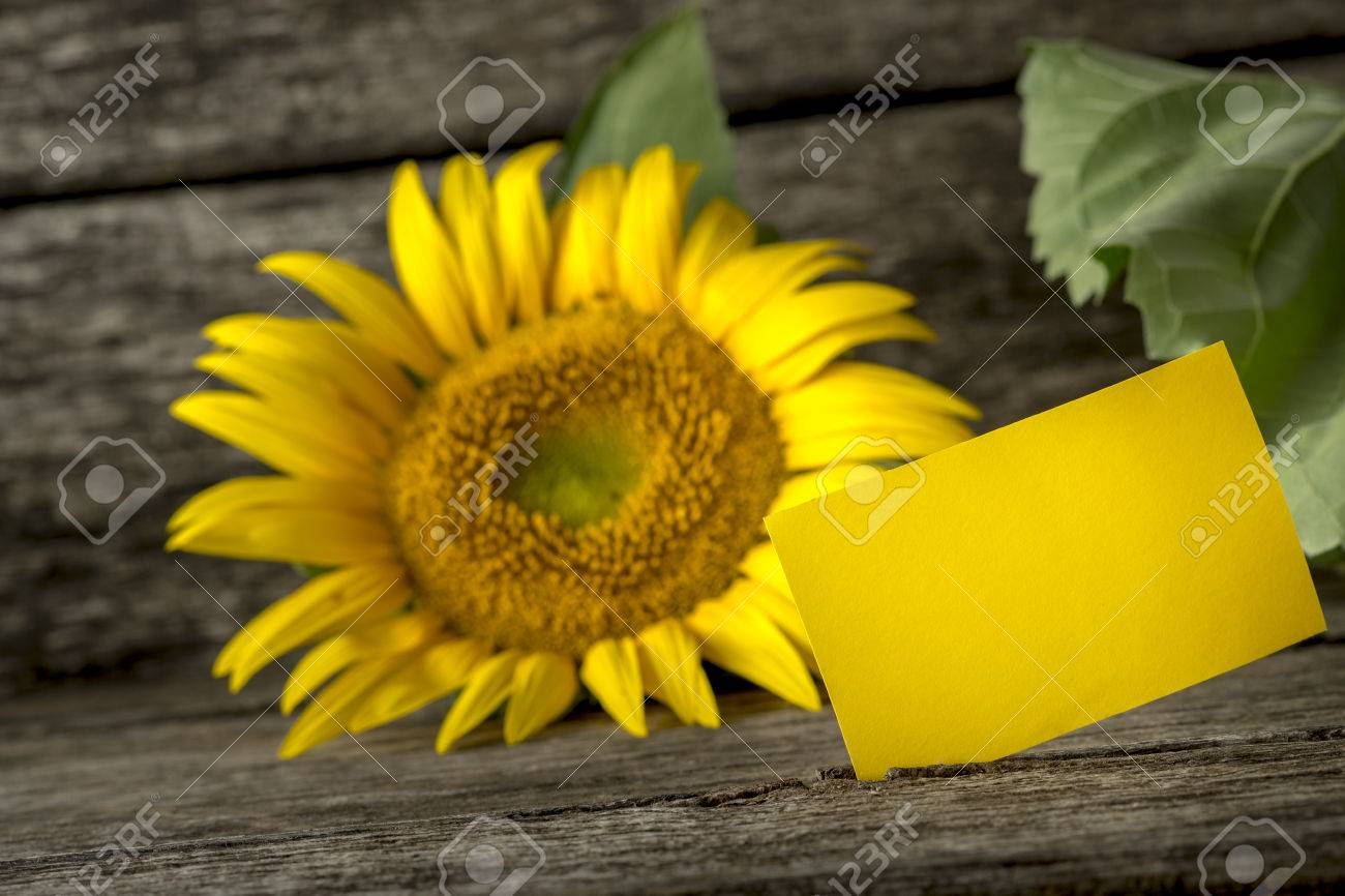 Blank Yellow Greeting Card And A Beautiful Blooming Sunflower On Textured Rustic Wooden Background With Copy