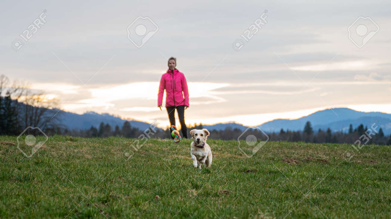 Cute dog running towards a ball toy to catch it outside in a beautiful meadow with her owner standing behind her. - 169239354