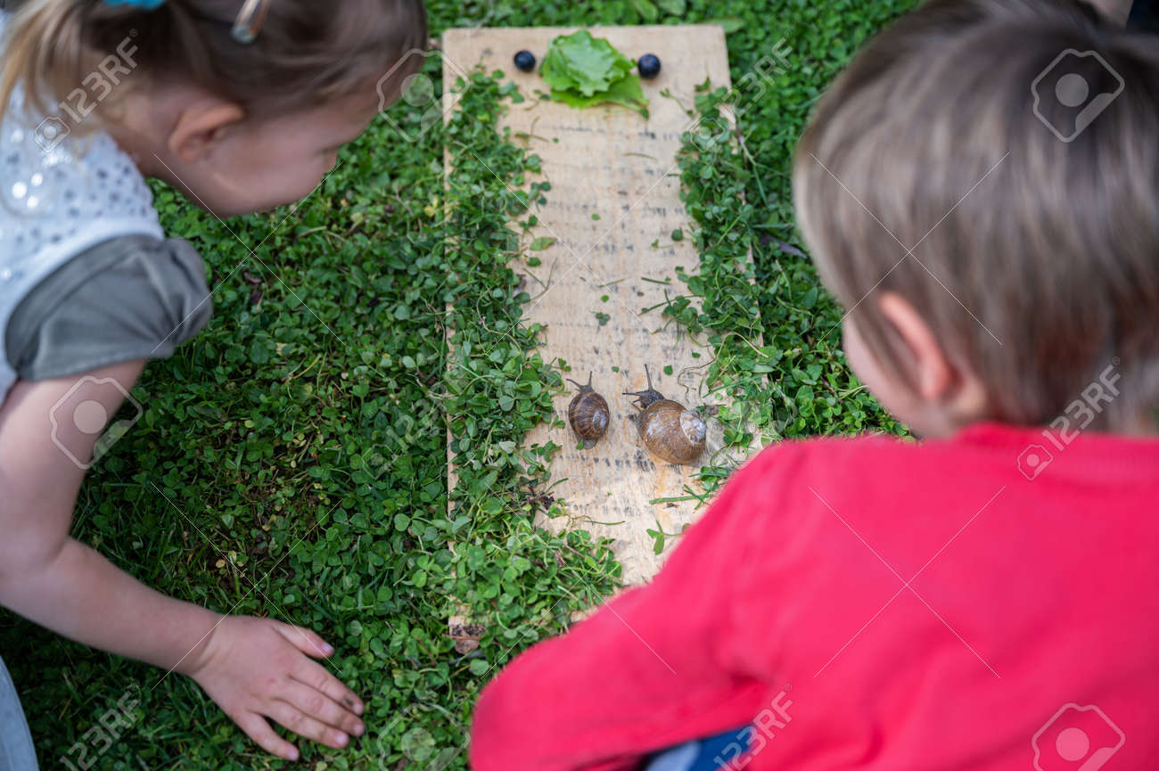 Two toddler children curiously looking at two snails going towards a lettuce leaf. - 169239407