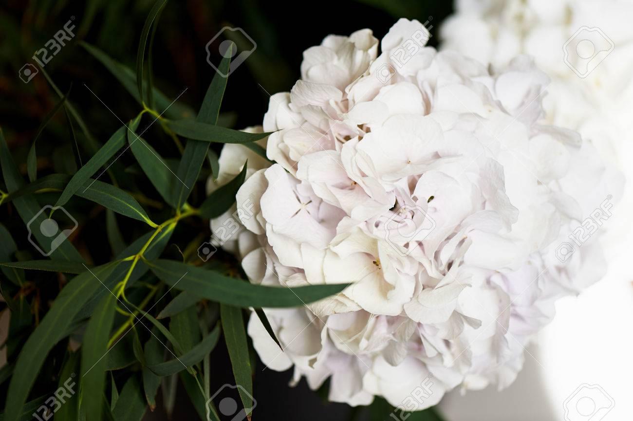Hydrangea bush with one bunch of white flowers and big green stock hydrangea bush with one bunch of white flowers and big green leaves for a natural background mightylinksfo