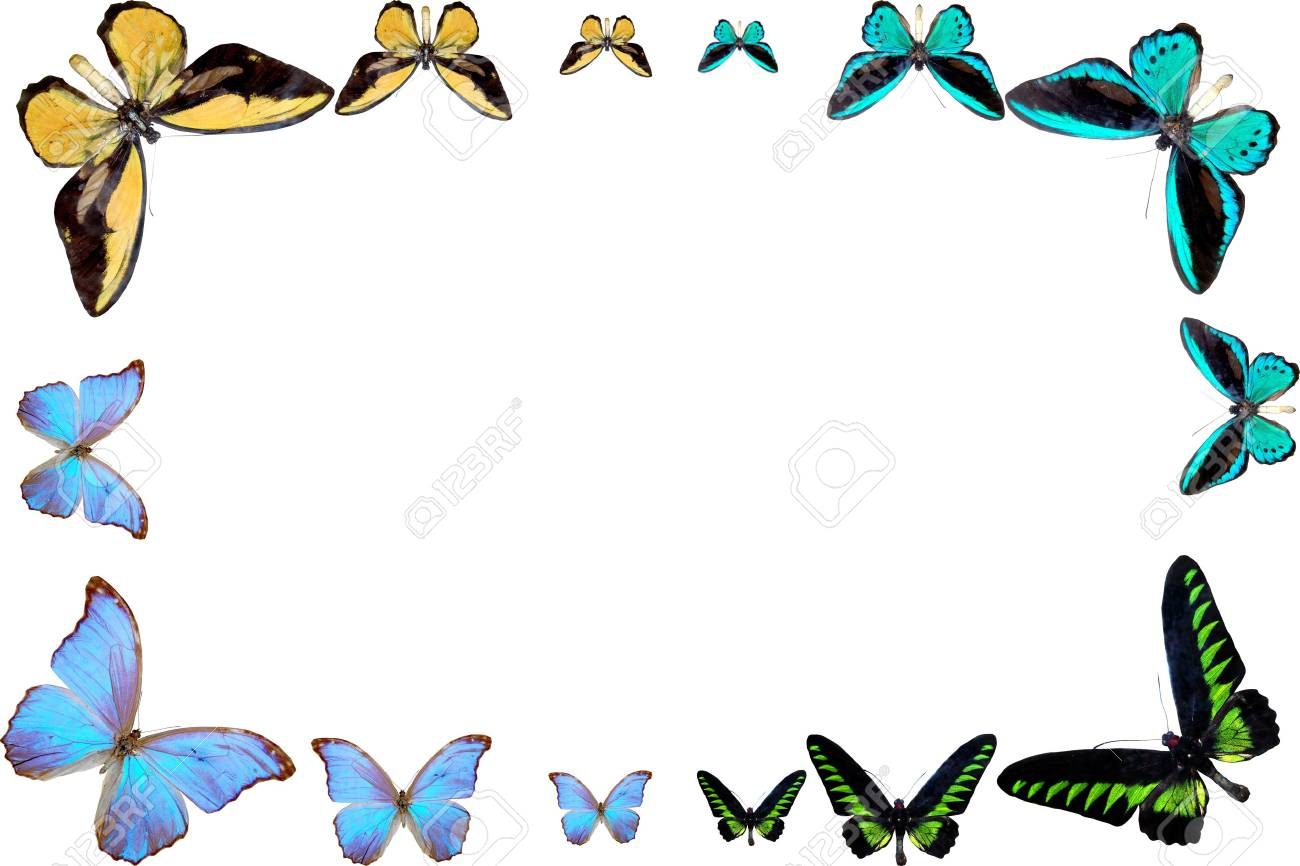 frame from butterfly of the miscellaneous of the colour Stock Photo - 5261630