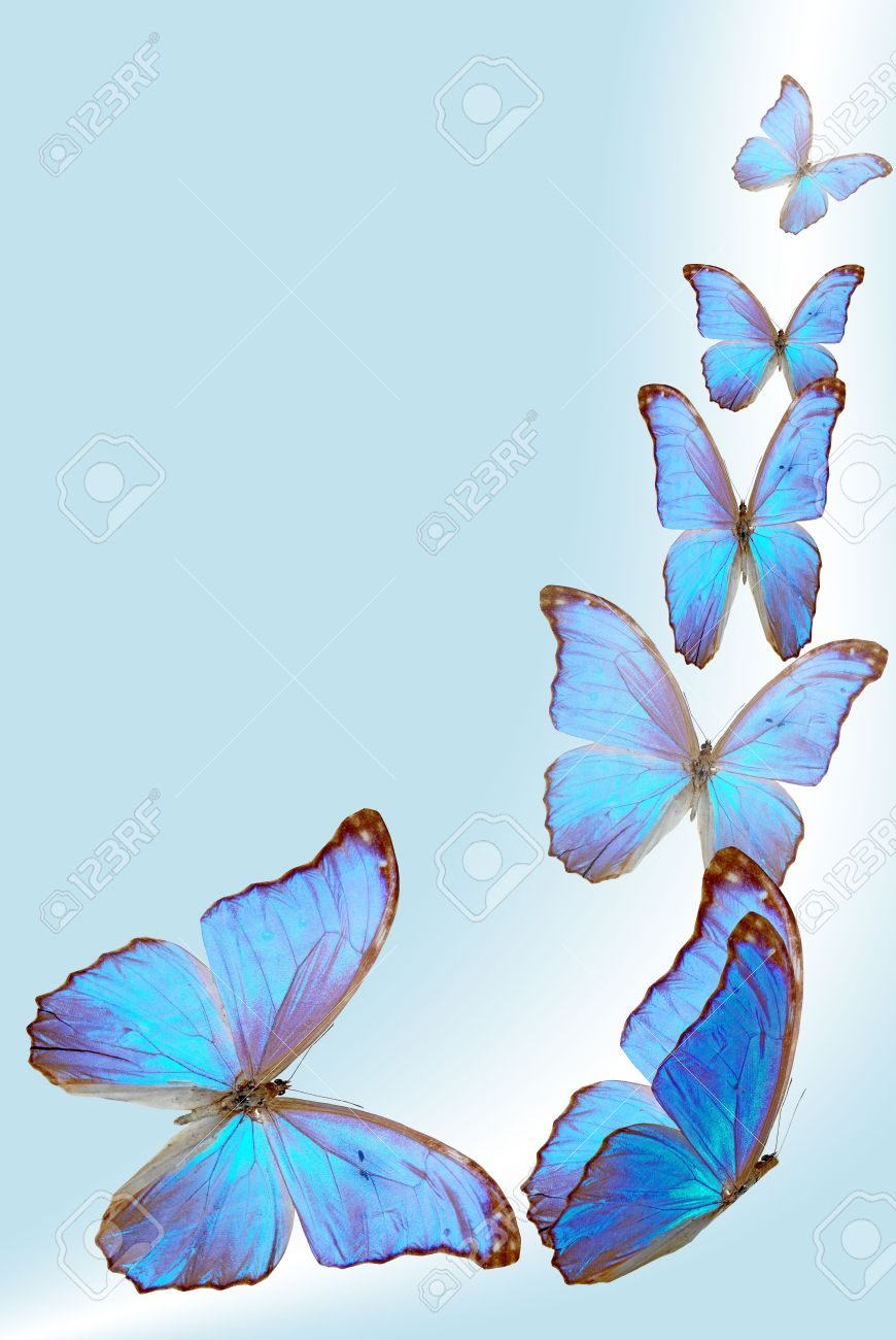 Blue Butterfly Flying In The Sky blue butterfly fly on