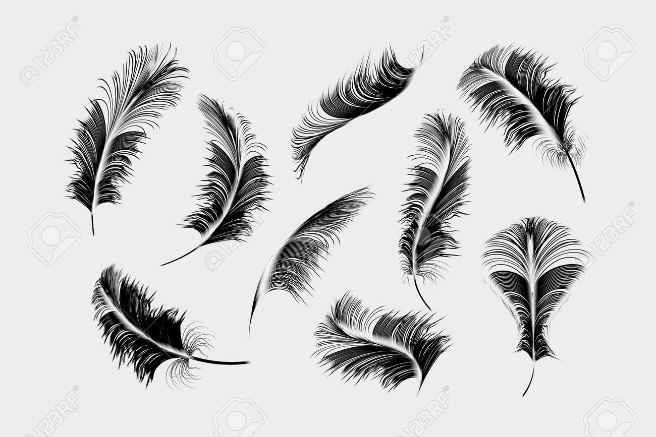 Vector gold,pink ,silver feathers collection set on a white background. - 155450845