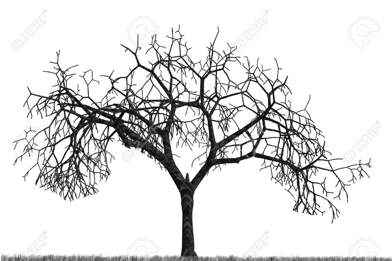 Dry tree Stock Photo - 1746100