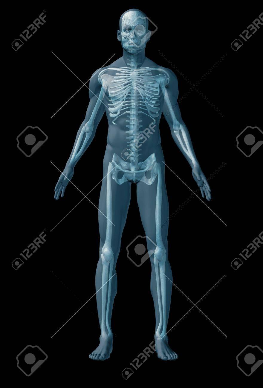 Menschlichen Skelett. Das Abstrakte Bild Der Anatomie Des Menschen ...