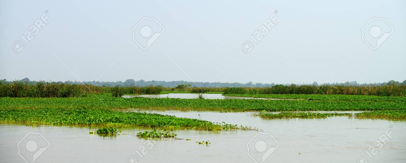 Tropical river . The river flowing in the country of Sri Lanka Stock Photo - 16596791