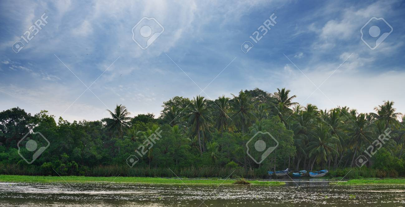 The river in a tropical forest . Country Of Sri Lanka Stock Photo - 17230837
