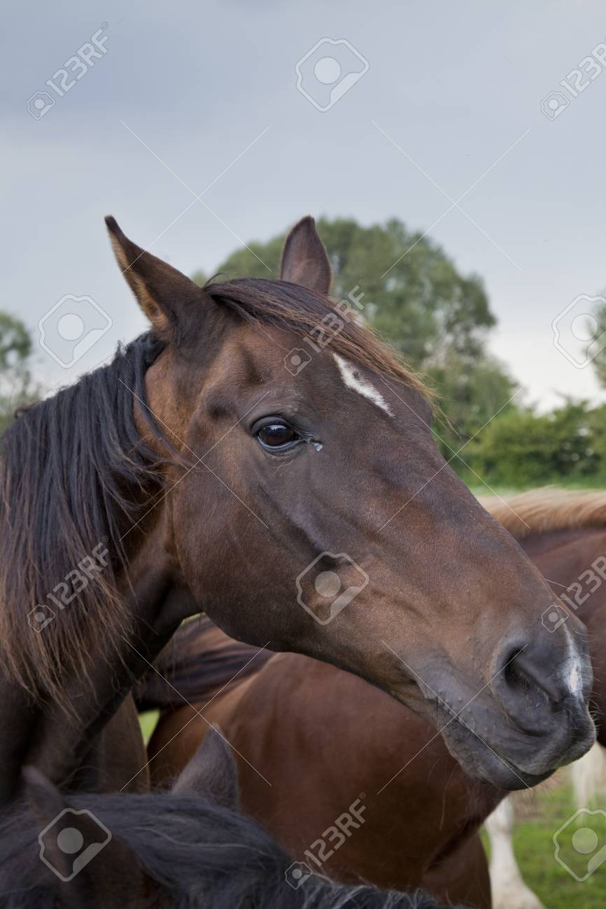 portrait of a brown horse on a sunny day Stock Photo - 10574082
