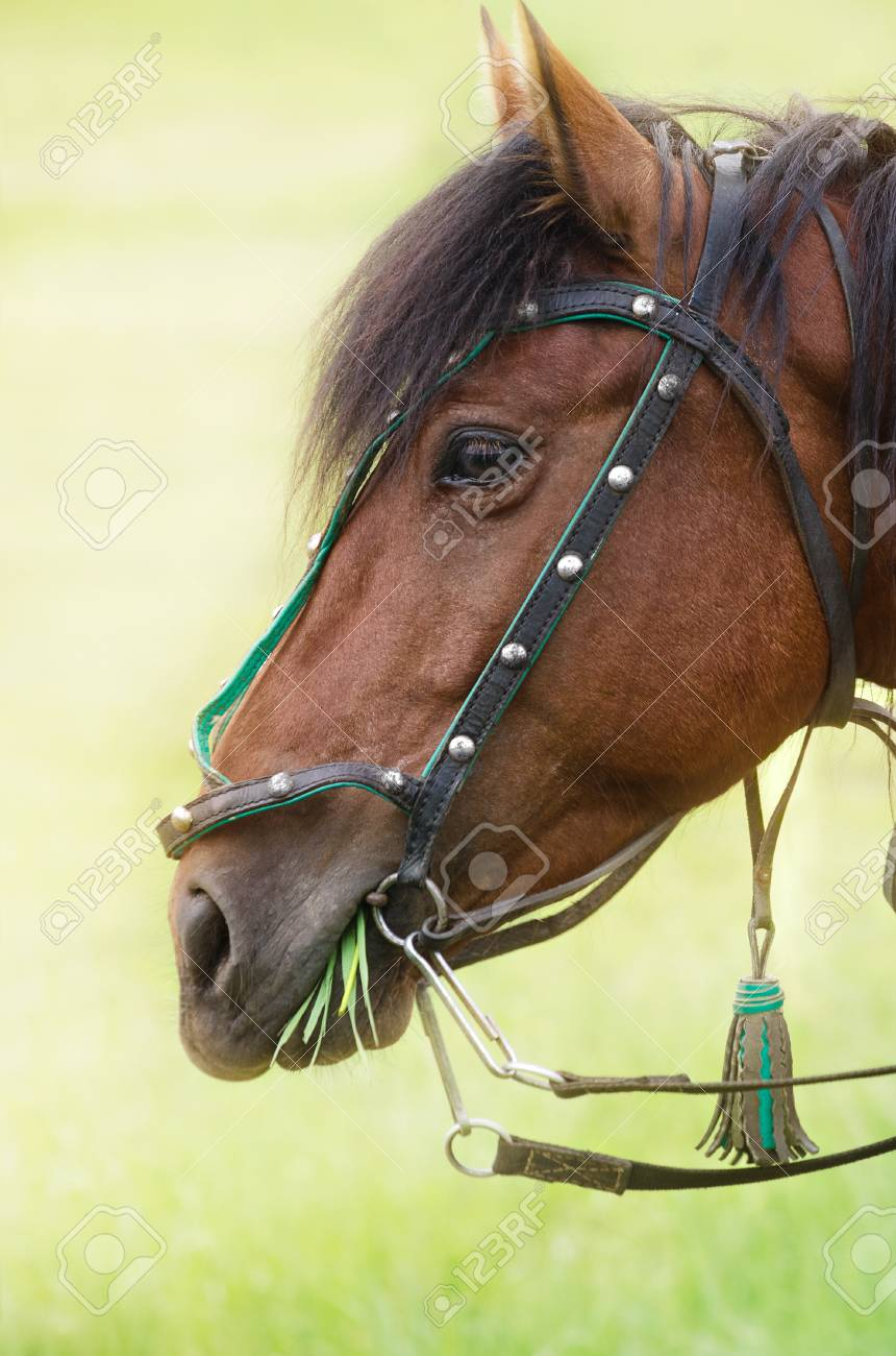 portrait of a horse chewing a bunch of grass in a meadow foto