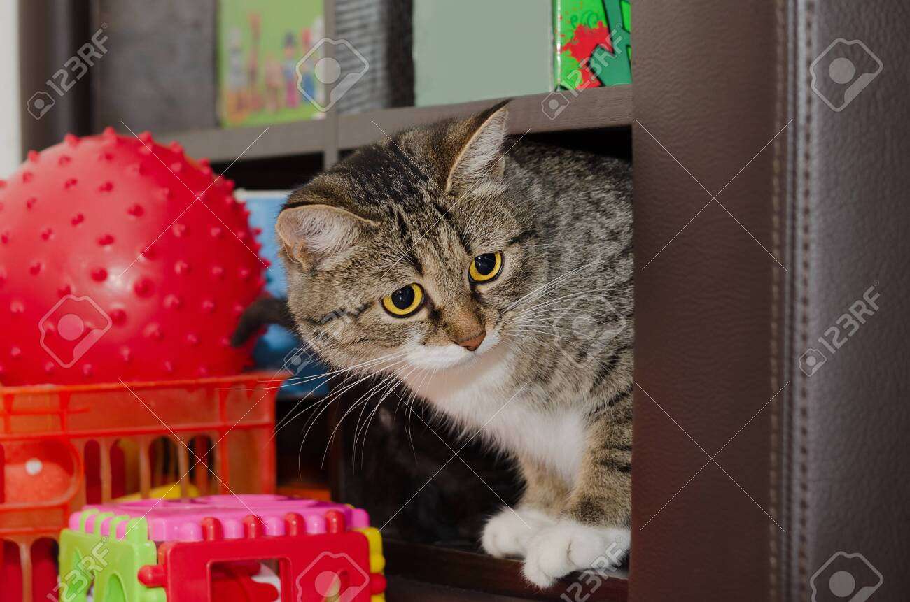 Young cat sitting on a shelf with toys. Selective focus - 132187582