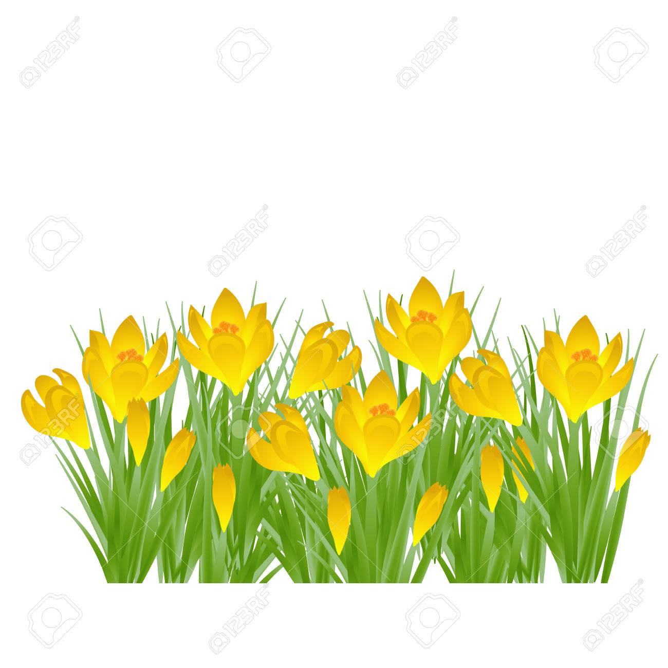 Early spring yellow flower crocus for easter on white background early spring yellow flower crocus for easter on white background vector illustration stockfoto 75072792 mightylinksfo