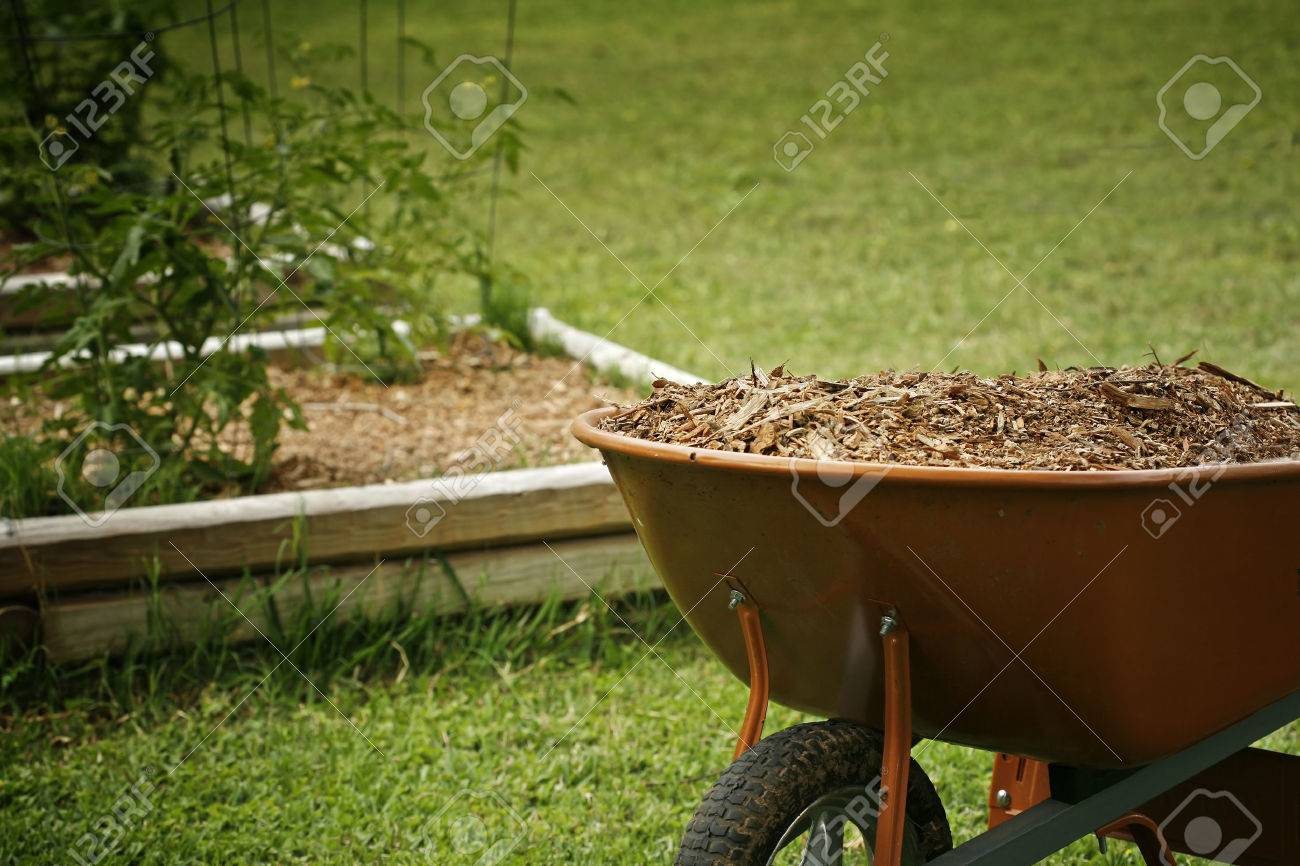 Mulch for garden with tomato plans bed on background - 37539912