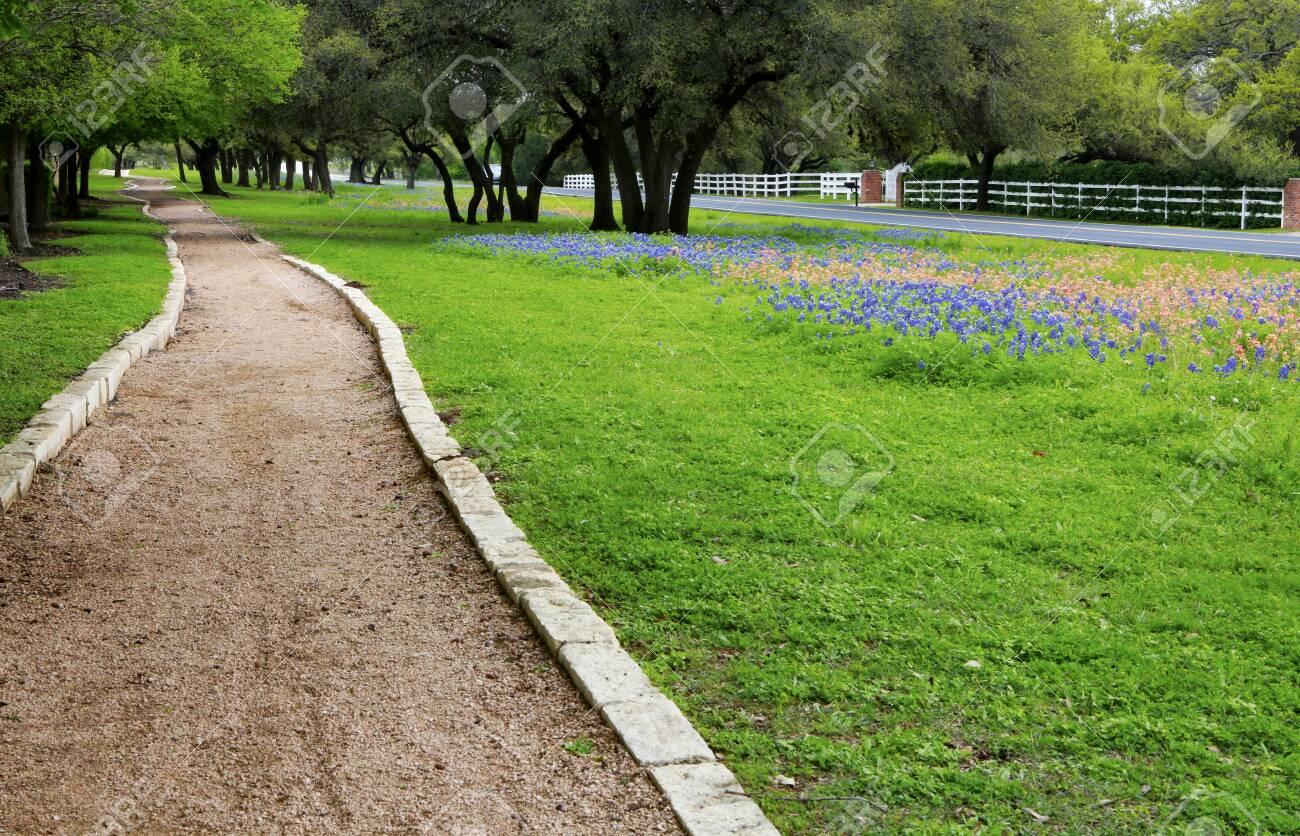 Walking trail along the beautiful field of Texas wild flower, green grass and oak trees. - 142968522