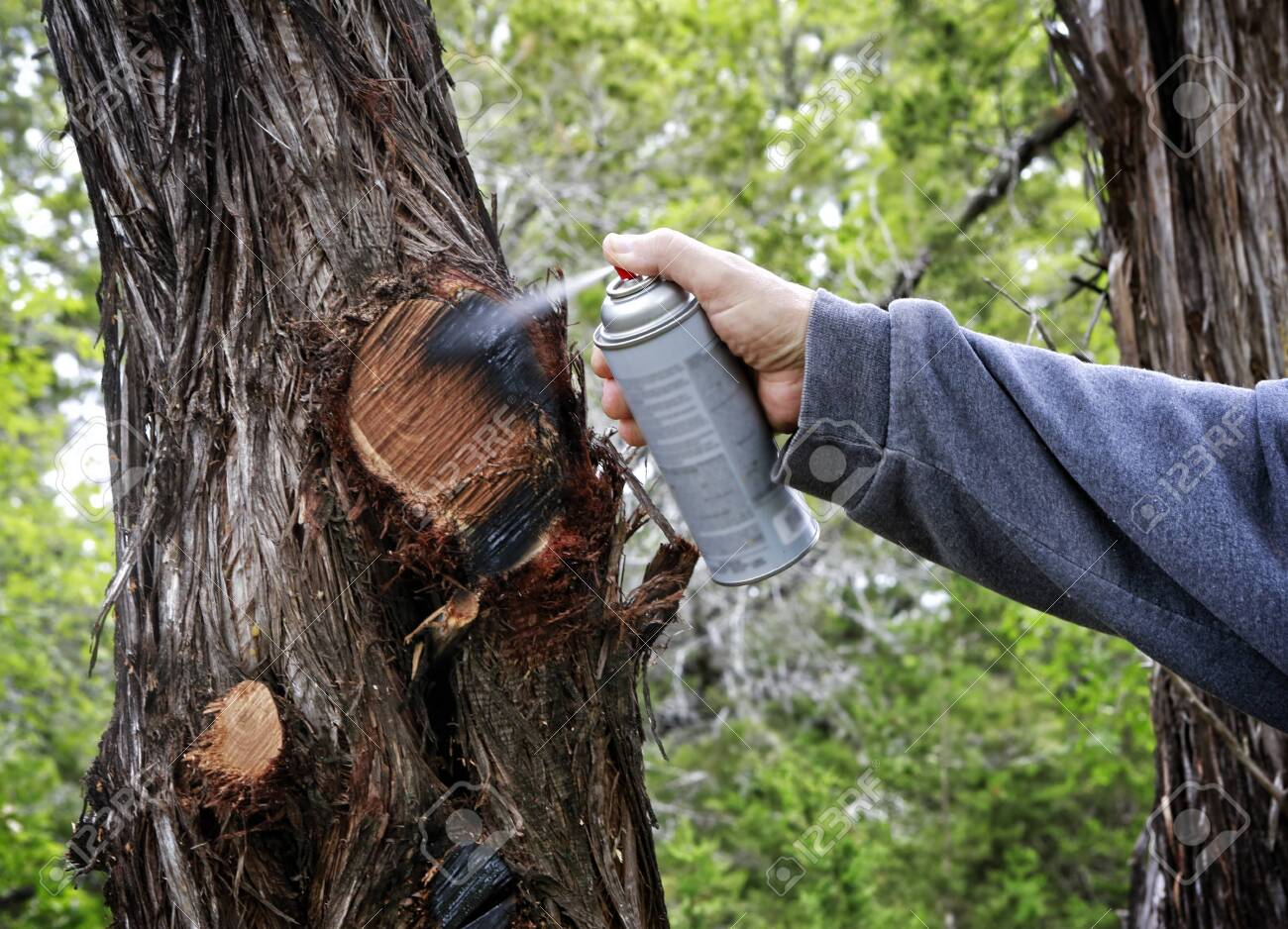 Spray with paint after cutting off tree branches. - 145878282