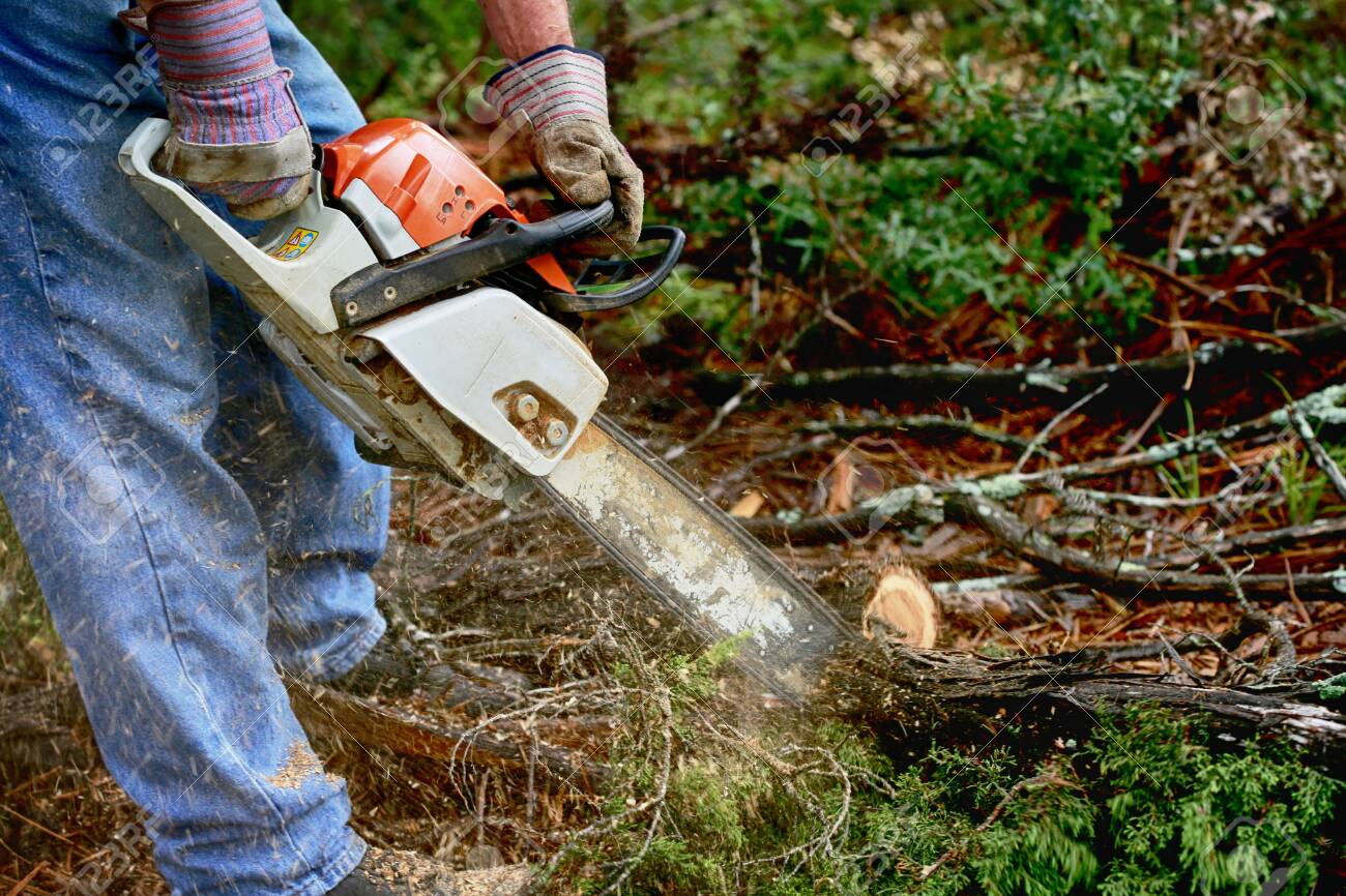 Professional is cutting trees using a chainsaw - 147994486