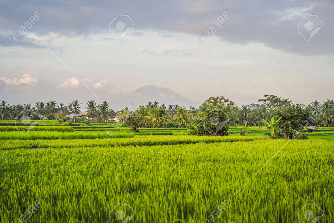 Landscape with green rice fields, palm trees and Agung volcano at sunny day in island Bali, Indonesia. Nature and travel concept - 126134603