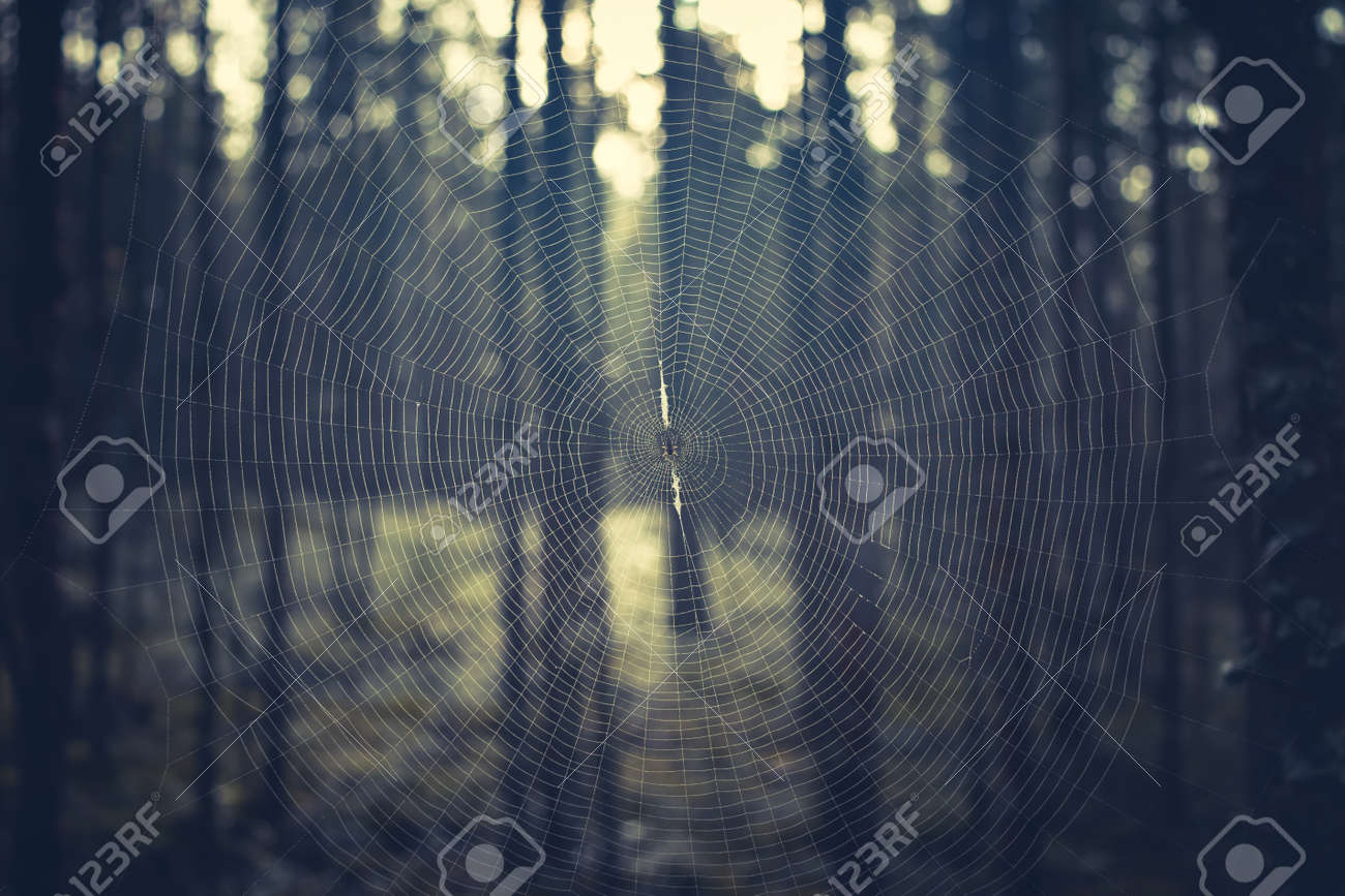 Close-up of a round spider web with a spider in the center in the forest - 170551941