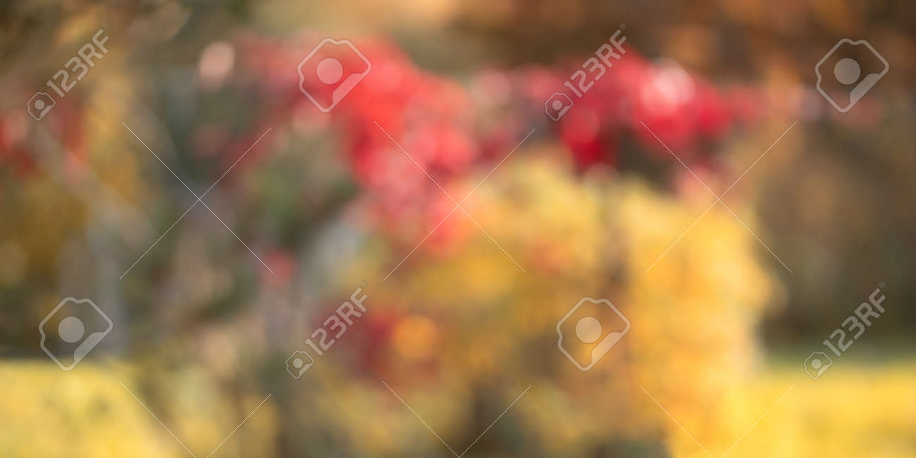 Natural autumn blurred background, lush fall foliage in the garden - 170506538