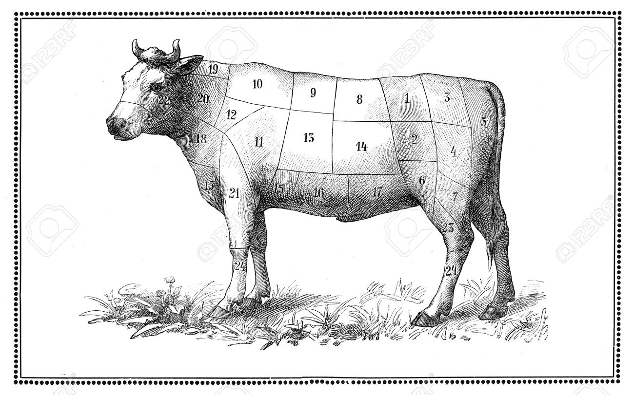 An old beef chart with numbered cuts My elaboration from an engravings of  Sueddeutsche Kueche  by Katharina Prato  - Verlagbuchhandlung Styria, 1913, author unidentified Stock Photo - 14329063