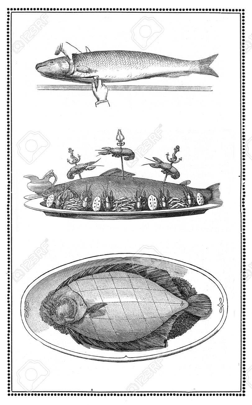 Engravings of fish and fish dishes  preparation and table presentations  My elaboration from engravings of  Sueddeutsche Kueche  by Katharina Prato  - Verlagbuchhandlung Styria, 1913, author unidentified Stock Photo - 14329064