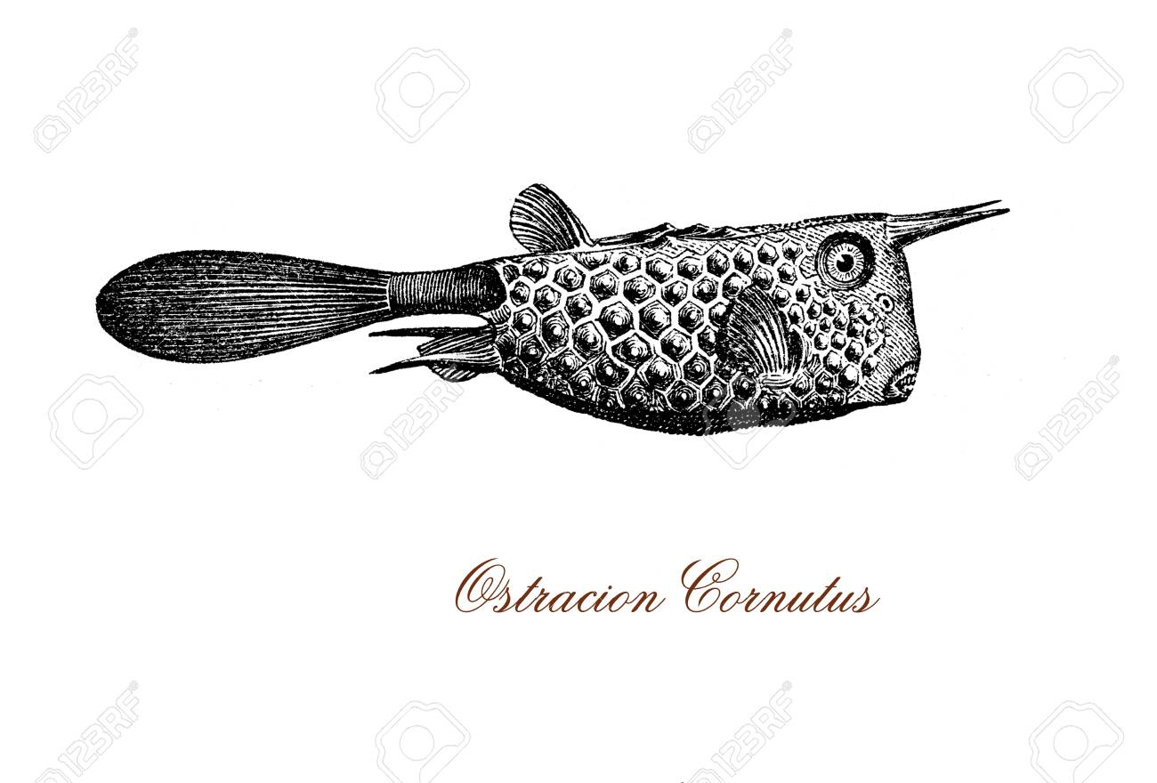 303 Dried Fish Stock Vector Illustration And Royalty Free Dried ... for Dried Fish Clipart  587fsj