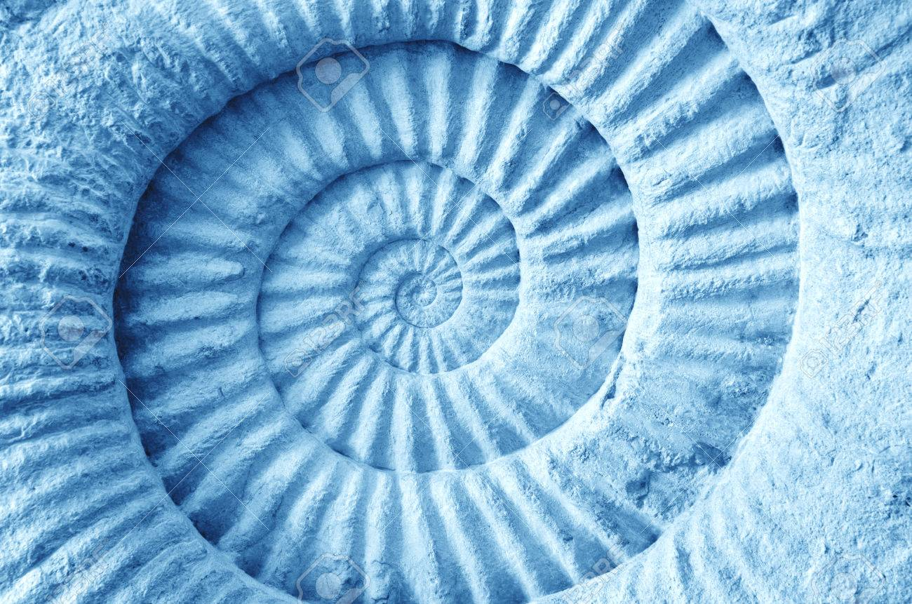 Abstract blue made from Ammonite prehistoric fossil on the surface - 36961310