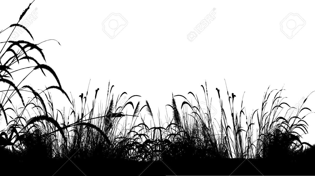 Grass Outline Vector vector illustration of grass