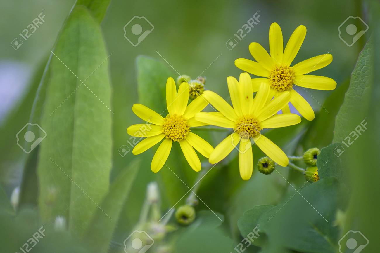 Small yellow flowers in grass close up view stock photo picture small yellow flowers in grass close up view stock photo 77578647 mightylinksfo