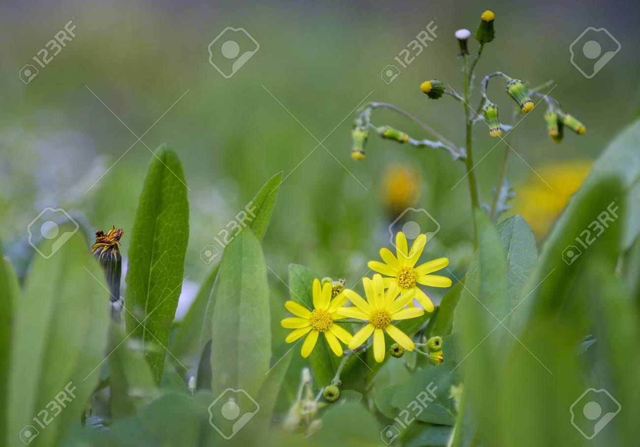 Small yellow flowers close up with grass environment stock photo small yellow flowers close up with grass environment stock photo 77598545 mightylinksfo