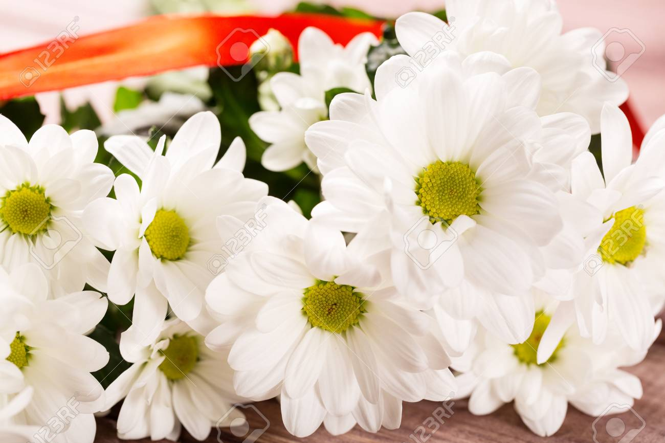 White Chrysanthemum Flowers With Red Ribbon On Wood Stock Photo