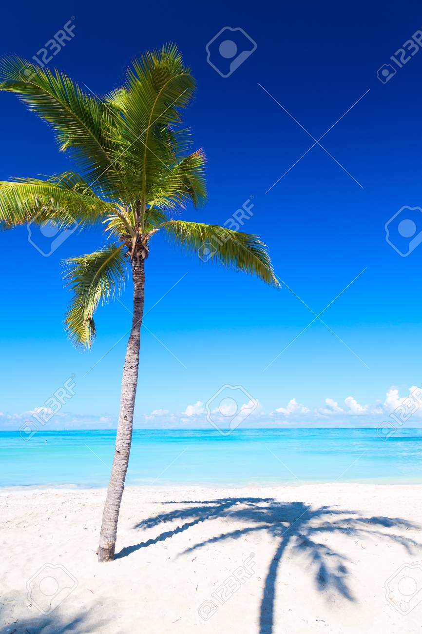 Vacation Holidays Background Wallpaper Palm And Tropical Beach