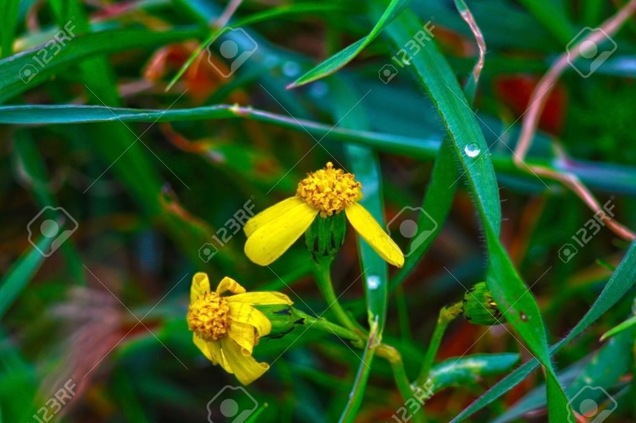 Very Small Spring Flowers Fotos Retratos Imgenes Y Fotografa De