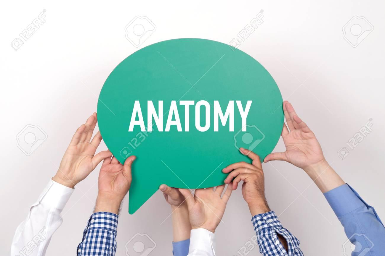Group Of People Holding The ANATOMY Written Speech Bubble Stock ...