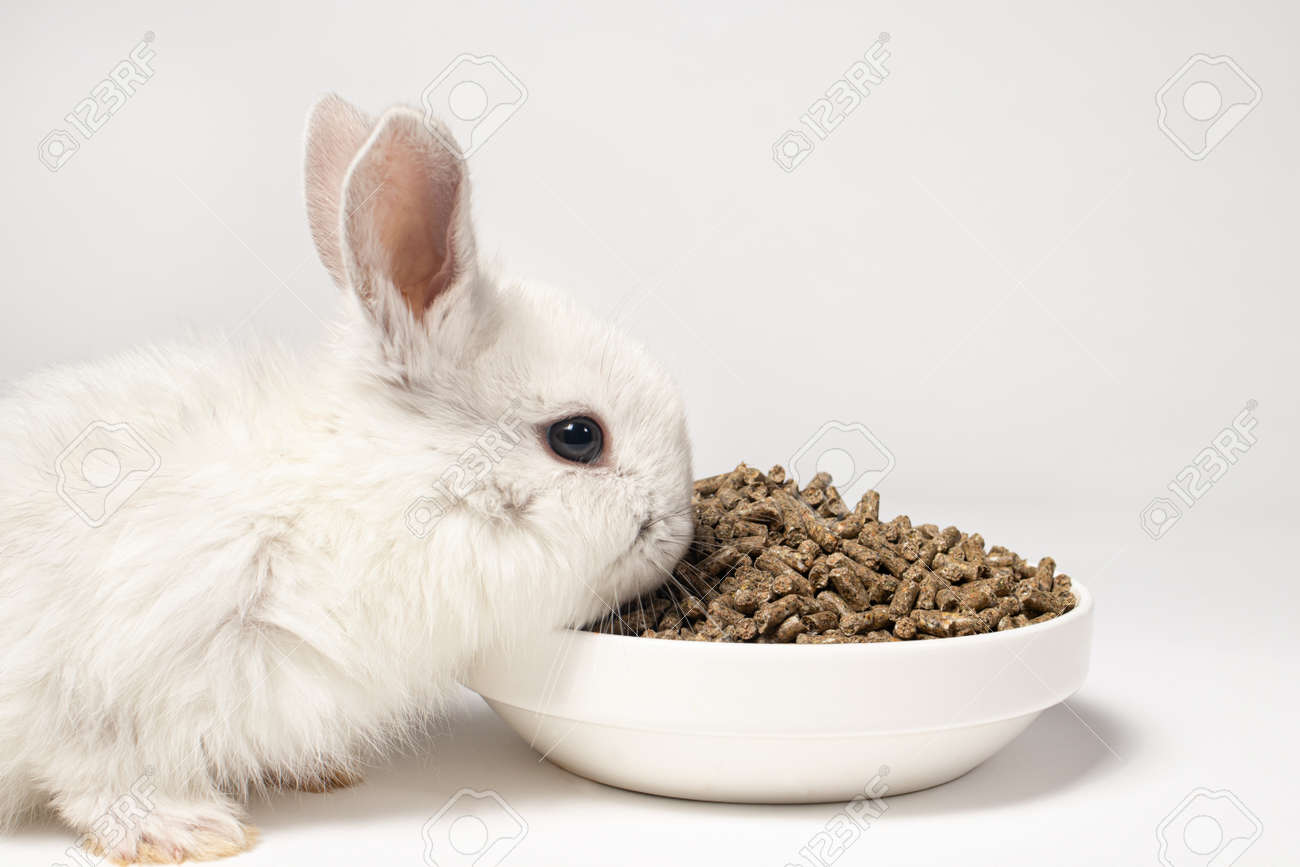 A small white rabbit eats feed on a white background. Balanced food for pets, pet food store - 161877391