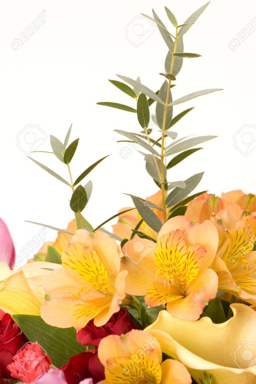 Tulips, Carnations & roses against a plain background Stock Photo - 716714