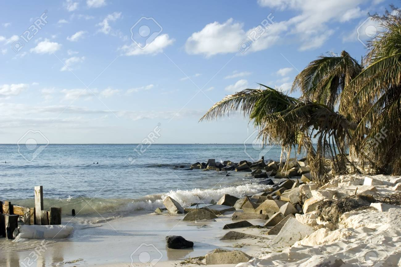 Palm trees on a beach in Isla mujeres mexico Stock Photo - 808517