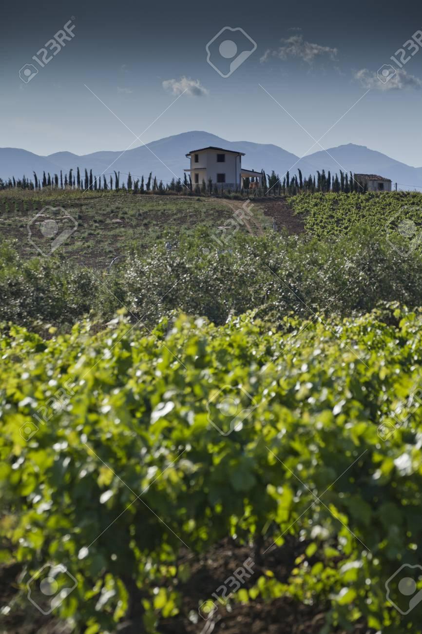The countryside around Alcamo in the distric of Trapani in Sicily  Stock Photo - 18699348