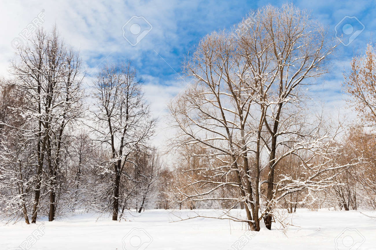 Cold winter forest in the afternoon covered with snow - 128286298