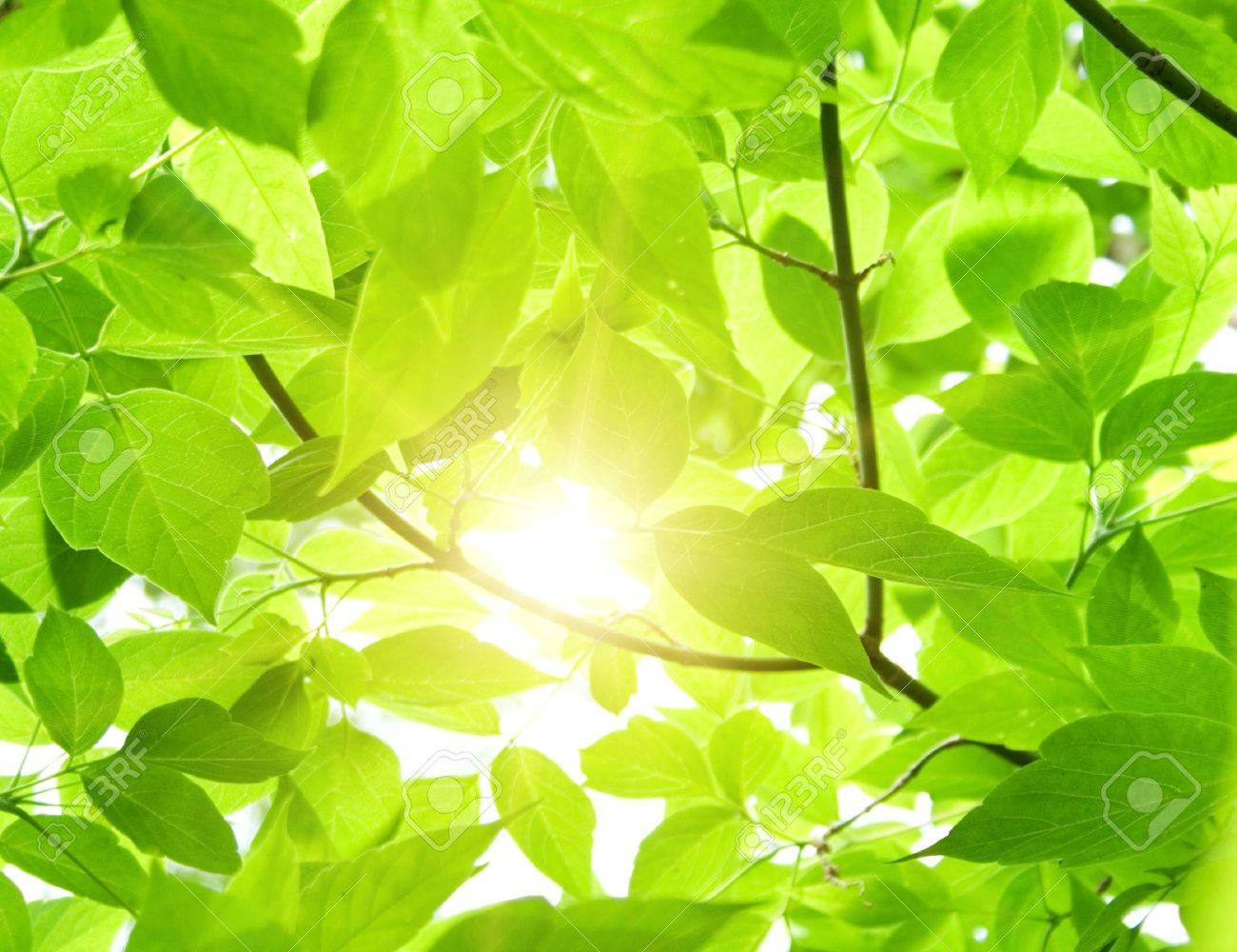 Green leaves Stock Photo - 7547807