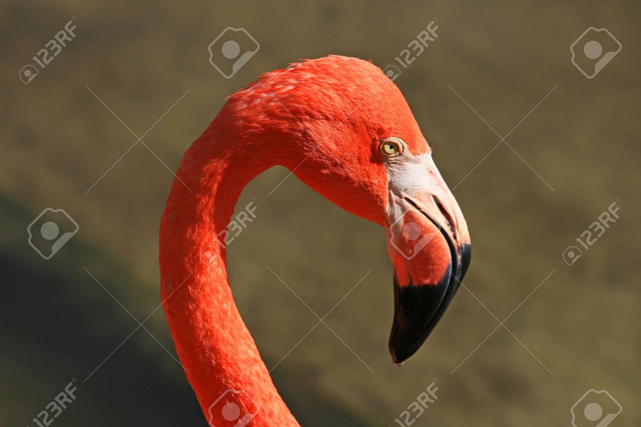 red flamingo in a park in Florida Stock Photo - 2080765