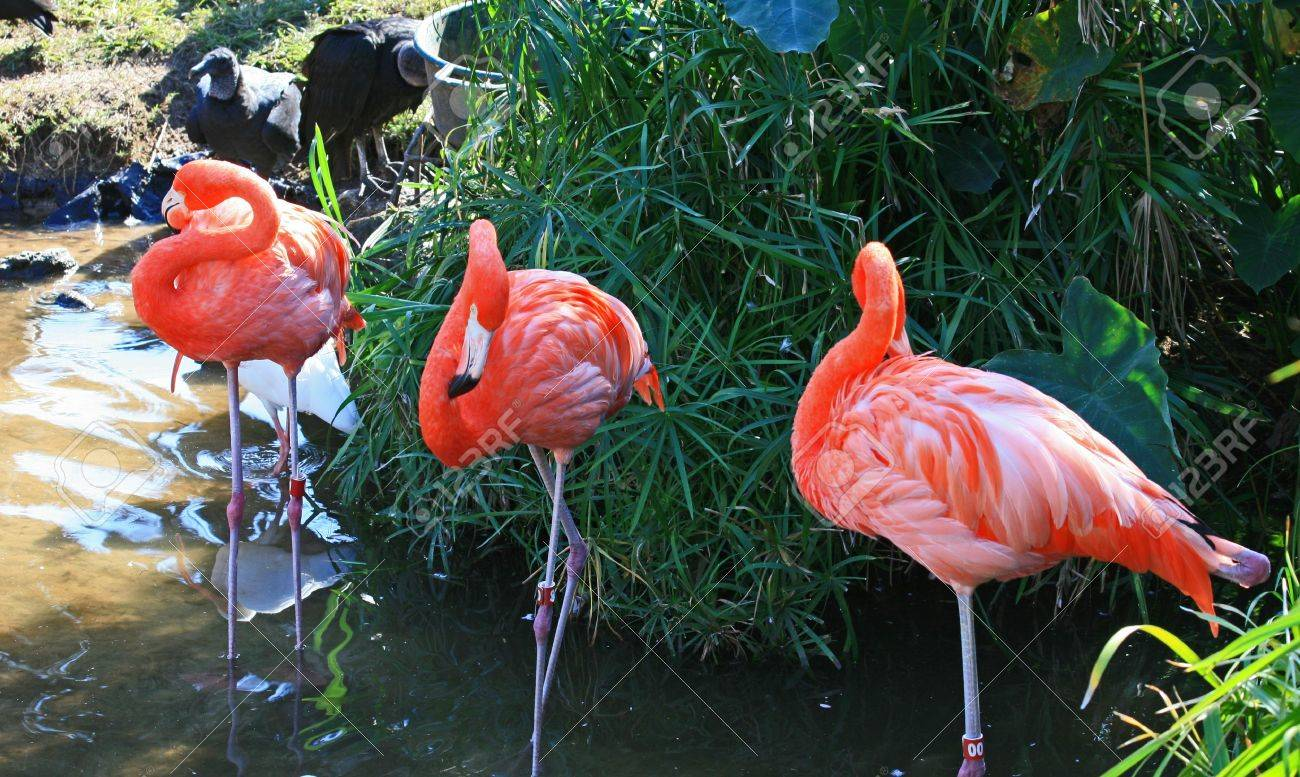 red flamingo in a park in Florida Stock Photo - 2080794
